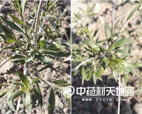 美高梅官方网站 25