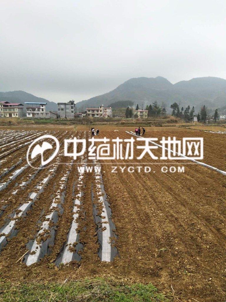 图三_gaitubao_com_watermark