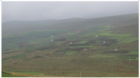海拔较高区域收籽当归地(白色为农户搭建帐篷)
