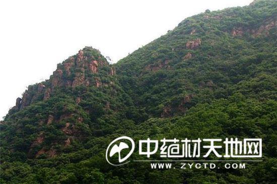 嵩山脚下的尖山风景区,是密银花的原产地.