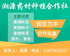 供应首页右侧广告-黄精-图2