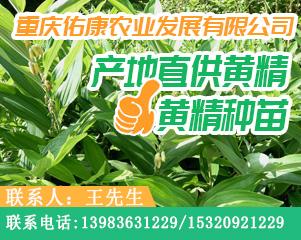 供应首页右侧广告-黄精-图4