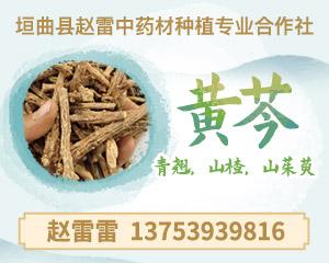 APP供应右侧-黄芩